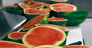 Watermelons-for-blog-071217