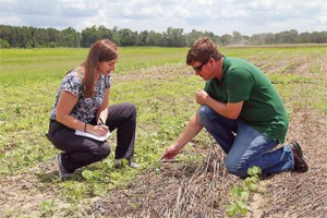 ARS plant physiologist Andrew Price and ARS agricultural economist Leah Duzy identify Palmer amaranth in a cotton study in Alabama. Click the image for more information about it.