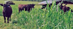 Two-day grazing school tackles fencing and soil health in detail