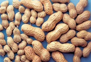 An ARS-developed moisture-monitoring system could save up to $22,000 per year in energy costs at a typical peanut-drying station. Photo by Jack Dykinga.