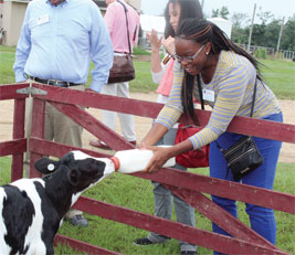 Sharmon Osae, University of Georgia College of Pharmacy clinical assistant professor, feeds a baby calf during the New Faculty Tour stop at UGA-Tifton.
