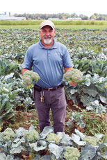 In an ARS research plot in South Carolina, geneticist Mark Farnham collects broccoli for heat-tolerance evaluations. Photo by USDA-ARS U.S. Vegetable Laboratory.