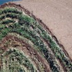 Sod field day set for Oct. 31, Nov. 1 in Ft. Valley and Perry