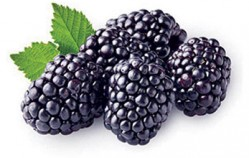 Blackberries spelling year-round success for Wish Farms