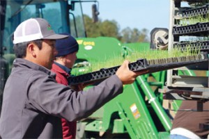Employees load onion trays onto a machine with PlantTape technology.
