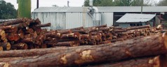 Florida forest industry generates nearly $13B in annual sales, 36,000 jobs