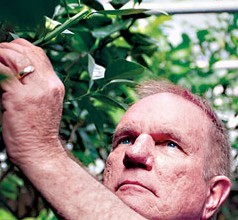 Could an 8 million-year-old gene help the citrus industry? UF researchers think so