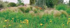 Once established, wildflowers add to landscape, feed beneficial pollinators.